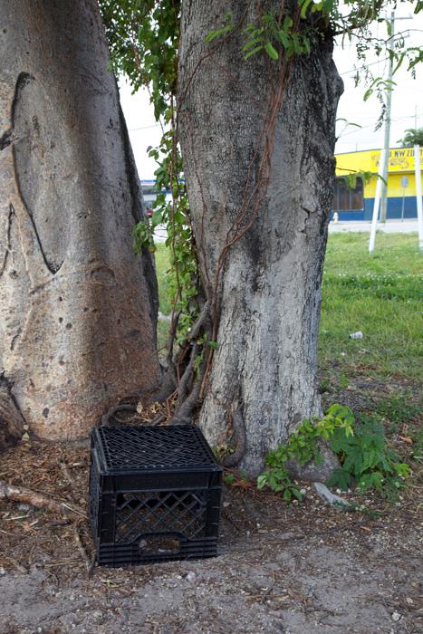 Installation view, Kyle Thurman , Miami, 2012