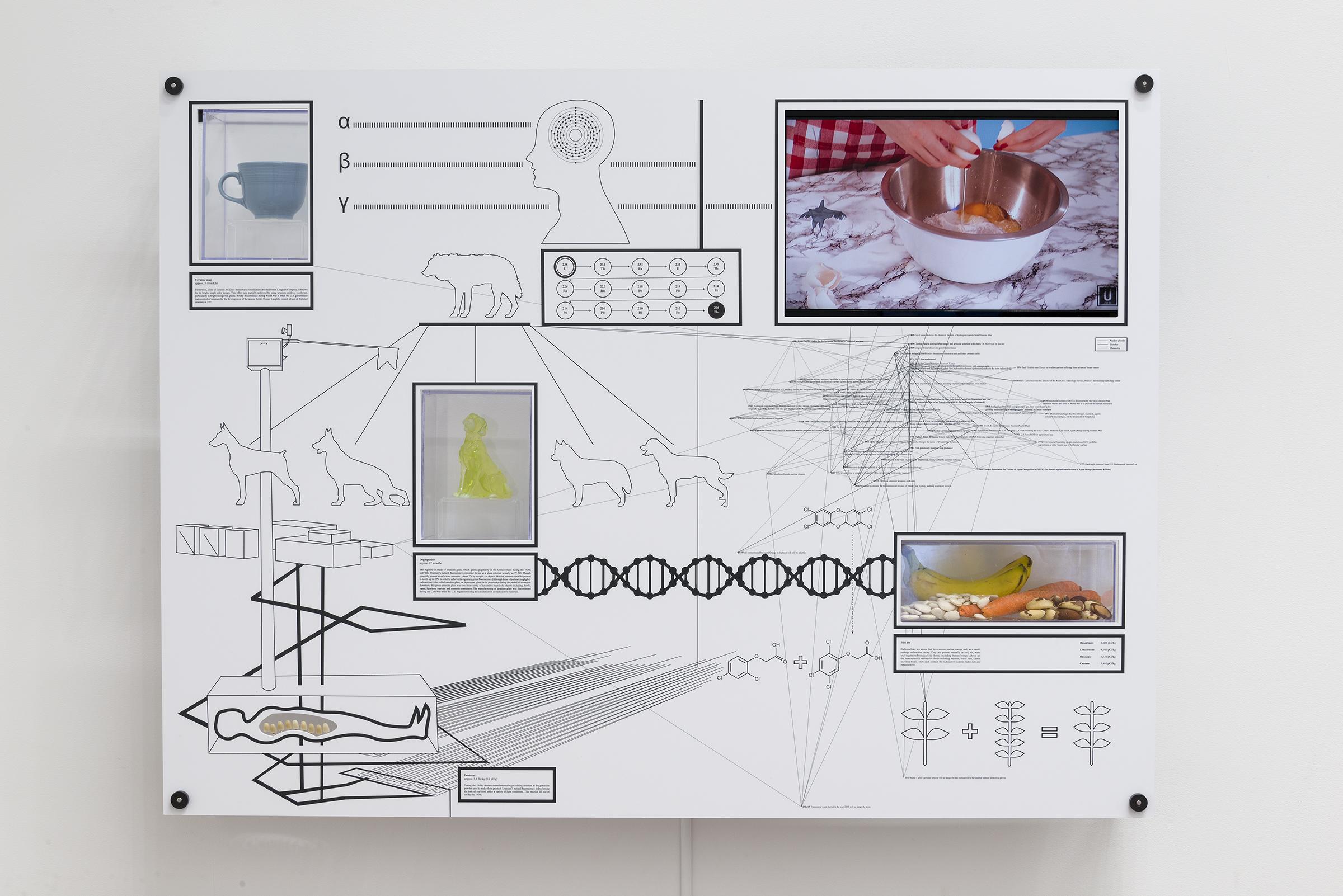 Encyclopedia Inc., Display Unit, U-238, 2015,digitally-printed Sintra PVC,Yellowcake (digital video, Edition 1/2) , ceramic mug, glass figurine, dentures, still life (bananas, brazil nuts, carrots, lima beans),36 x 48 x 6 in