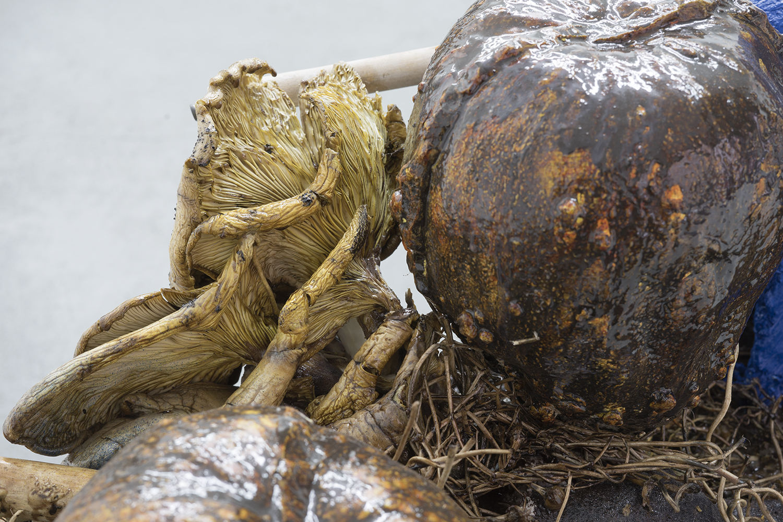 Brandon C Ndife,   Globetrotter  (detail), 2018, Cast resin, Winter Oyster mushroom, organic plant matter, wood, hydrocal, steel, 32 × 48 × 16 in