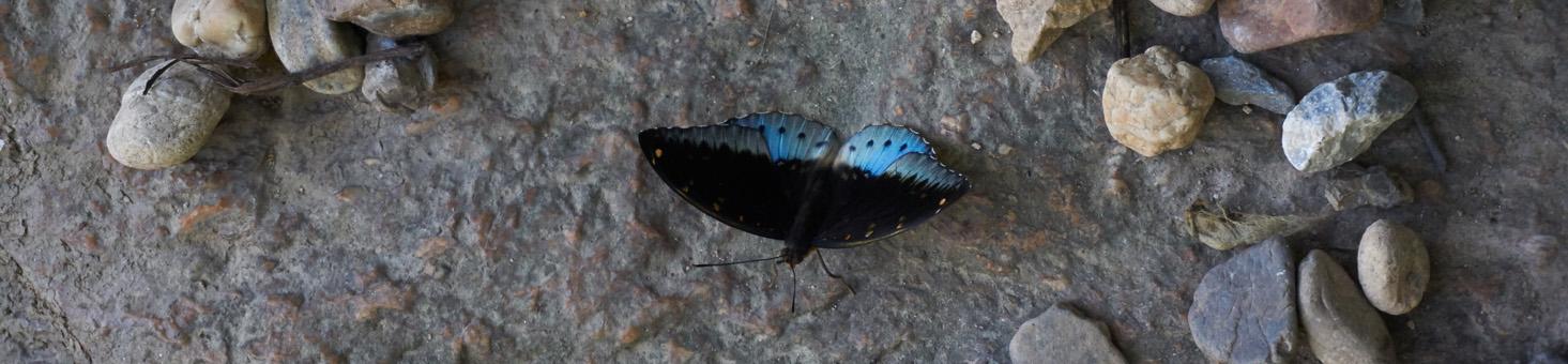 Butterfly1465x340.jpg