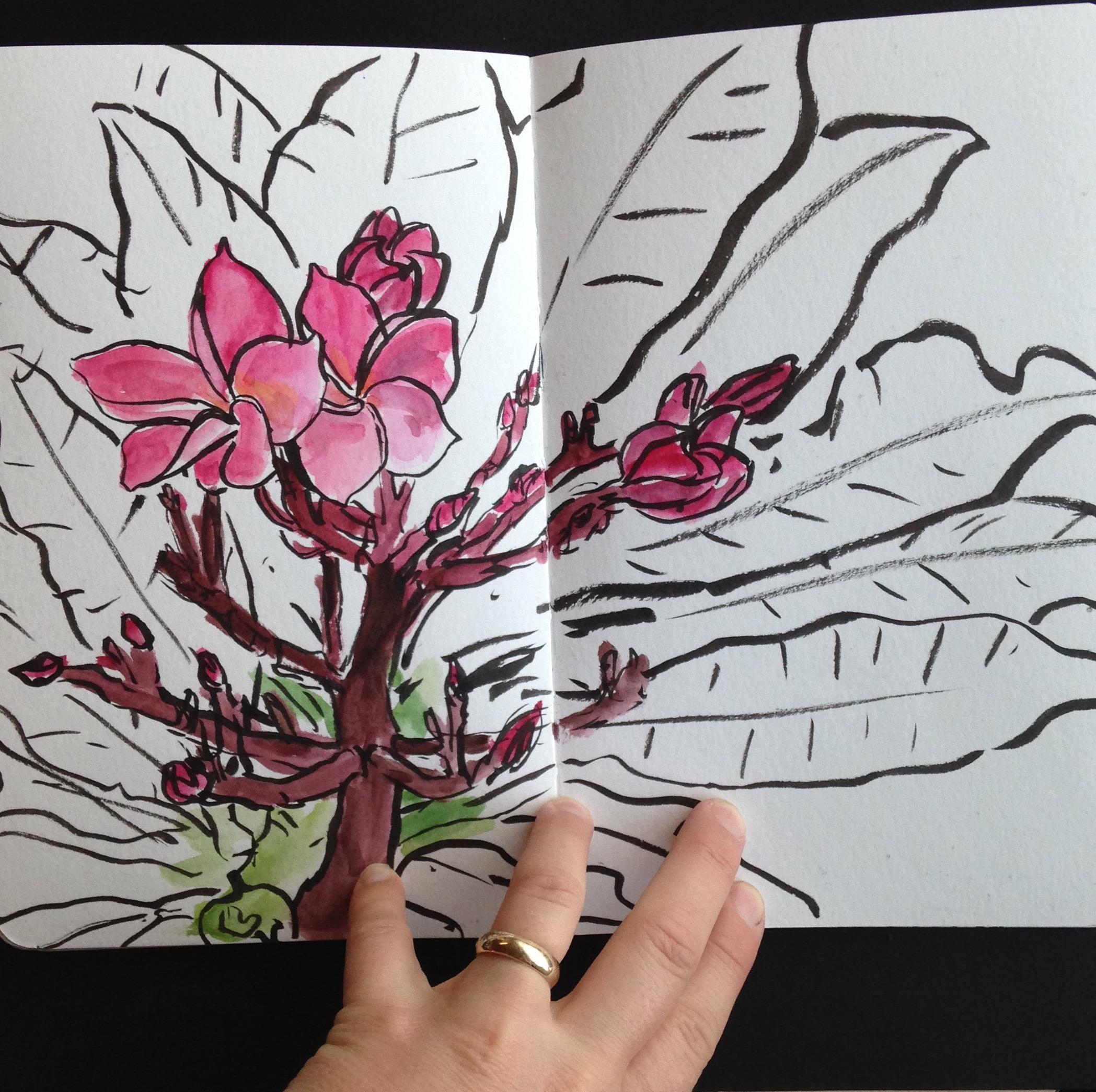 Pink Plumeria.JPG