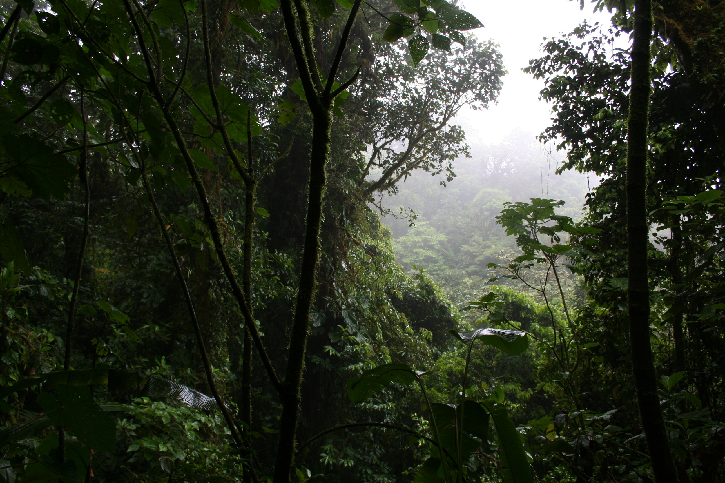 Guys, I know this may come as a surprise, but it is WET and misty in a cloud forest!