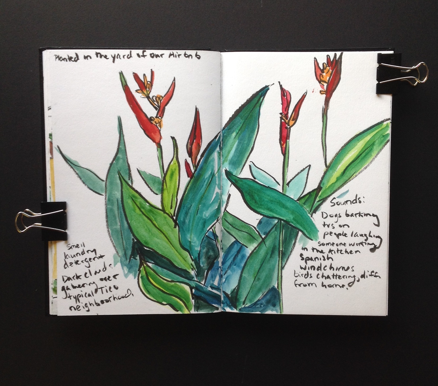 Relatives of Birds of Paradise Flowers planted in the Airbnb yard.