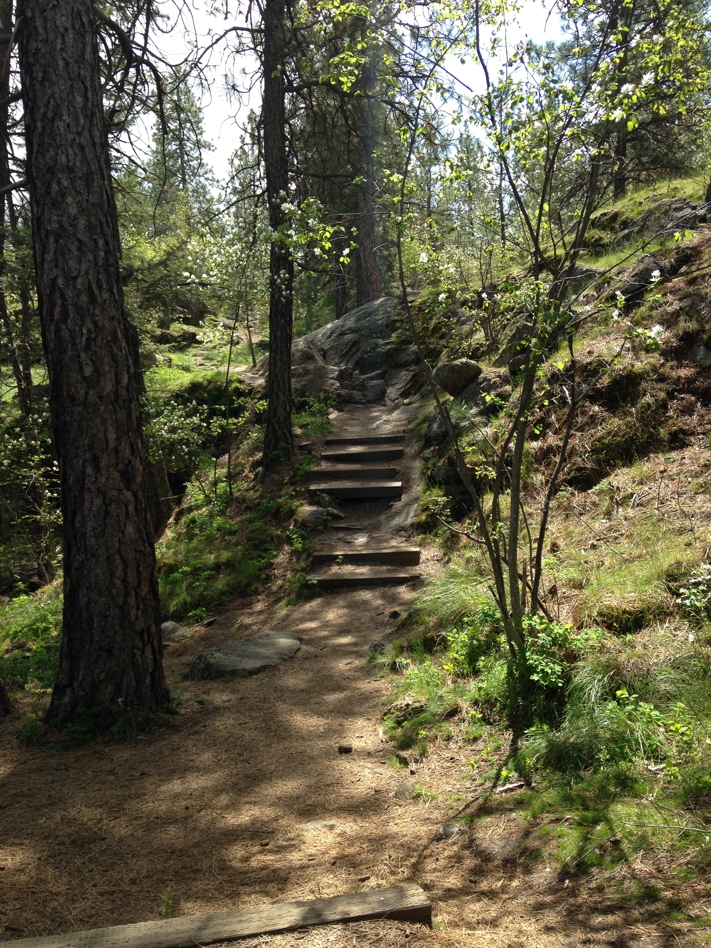 Hiking trails in the Dishman Hills are winding and exploratory.