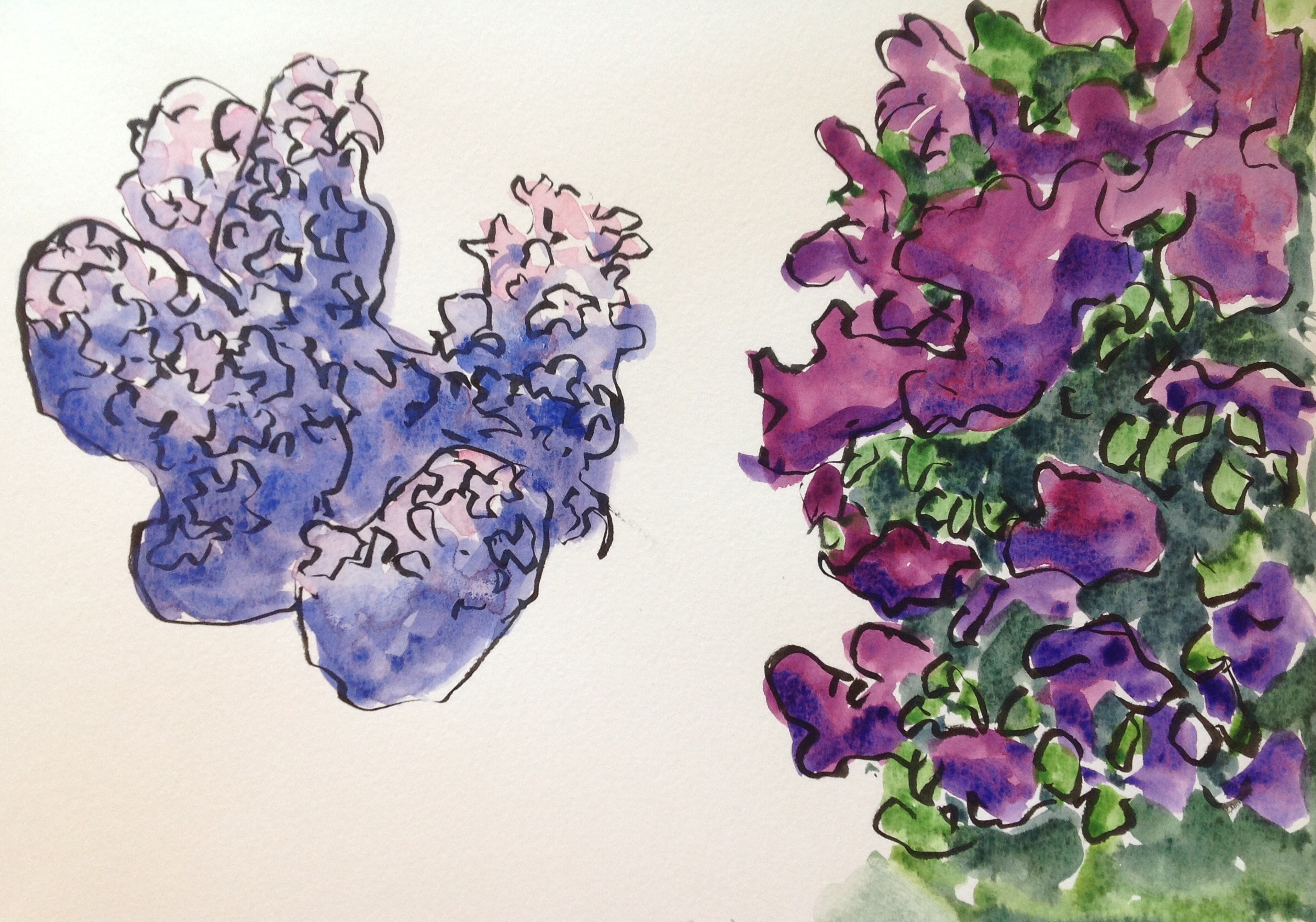 """Lilacs come in many different shades-white, lavender, mauve, dark purple, """"lilac"""" and these days, even pink!"""