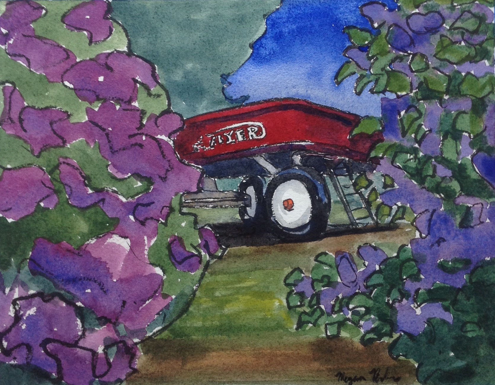 Red Flyer lilacs