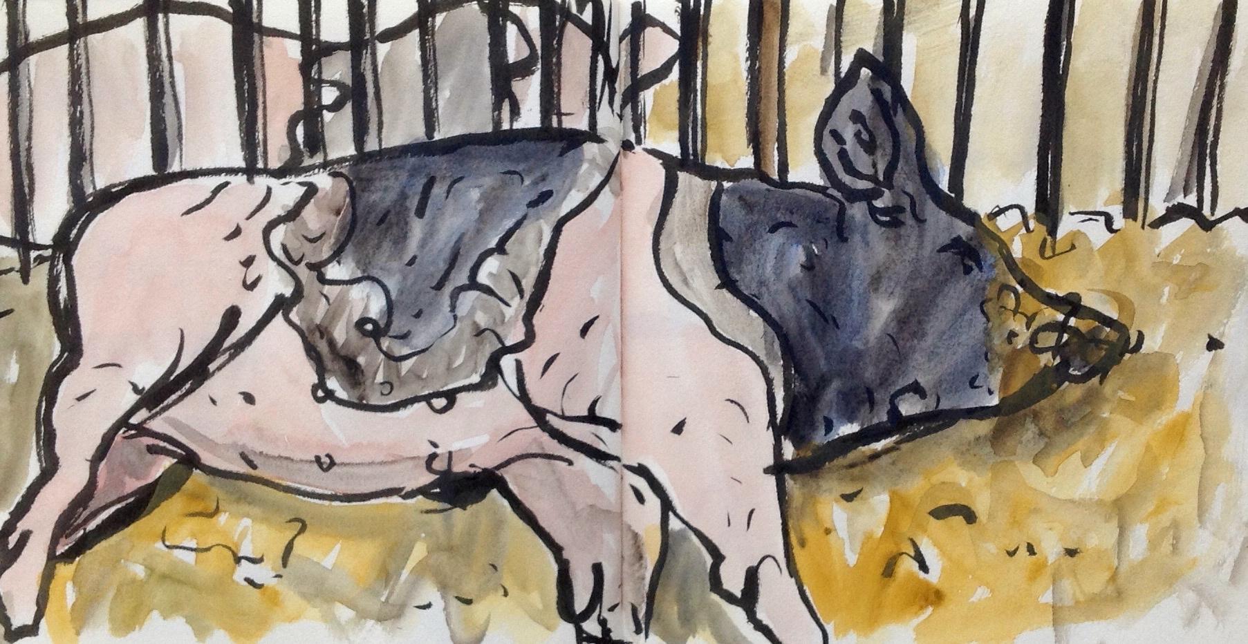 Pigclose.JPG