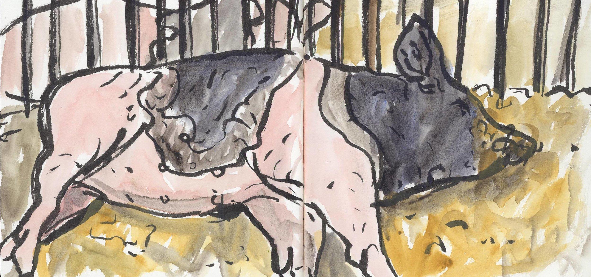 sketch_pig_in_sty_300dpi.jpg