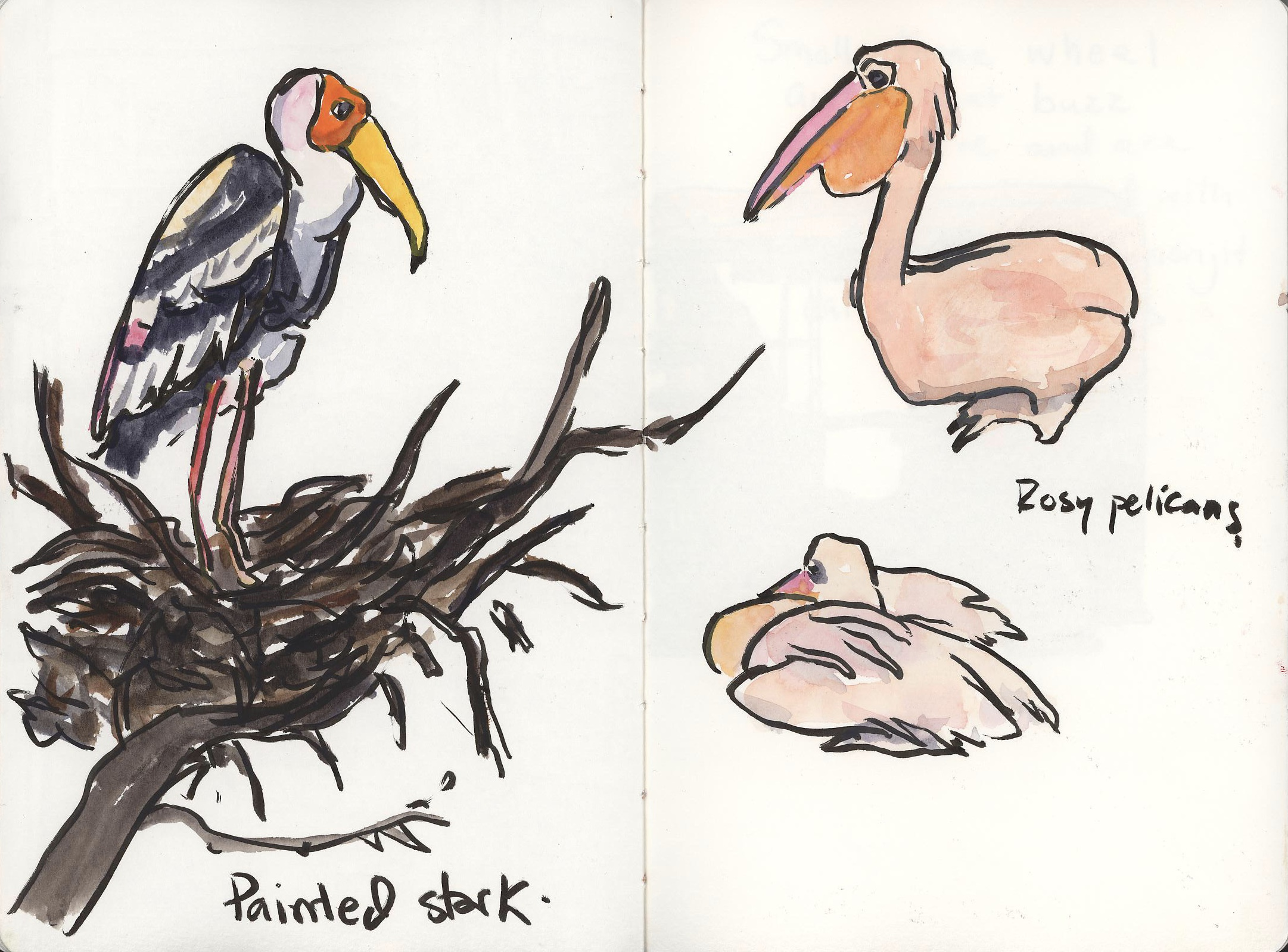 We went to the zoo because Luke had never seen a live tiger before. We saw several and got to hear them roar which was a smidge hair raising. I loved all these pink birds and managed a couple sketches before wilting in the heat-around 95 degrees with 70% humidity.  One more post to go!