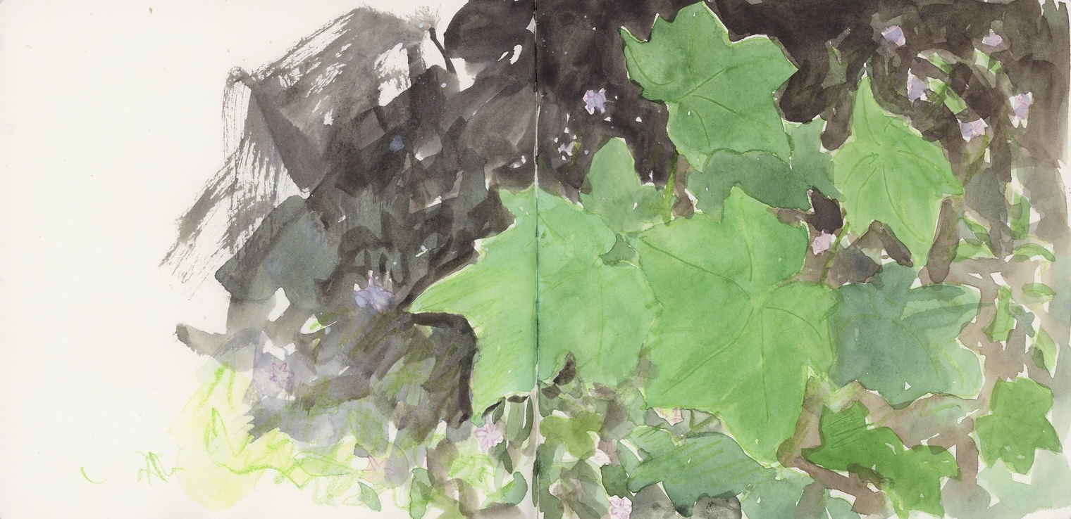 Enjoying a rainy summer day, painting some salmon berry leaves photographed in Priest Lake in a sketchbook.