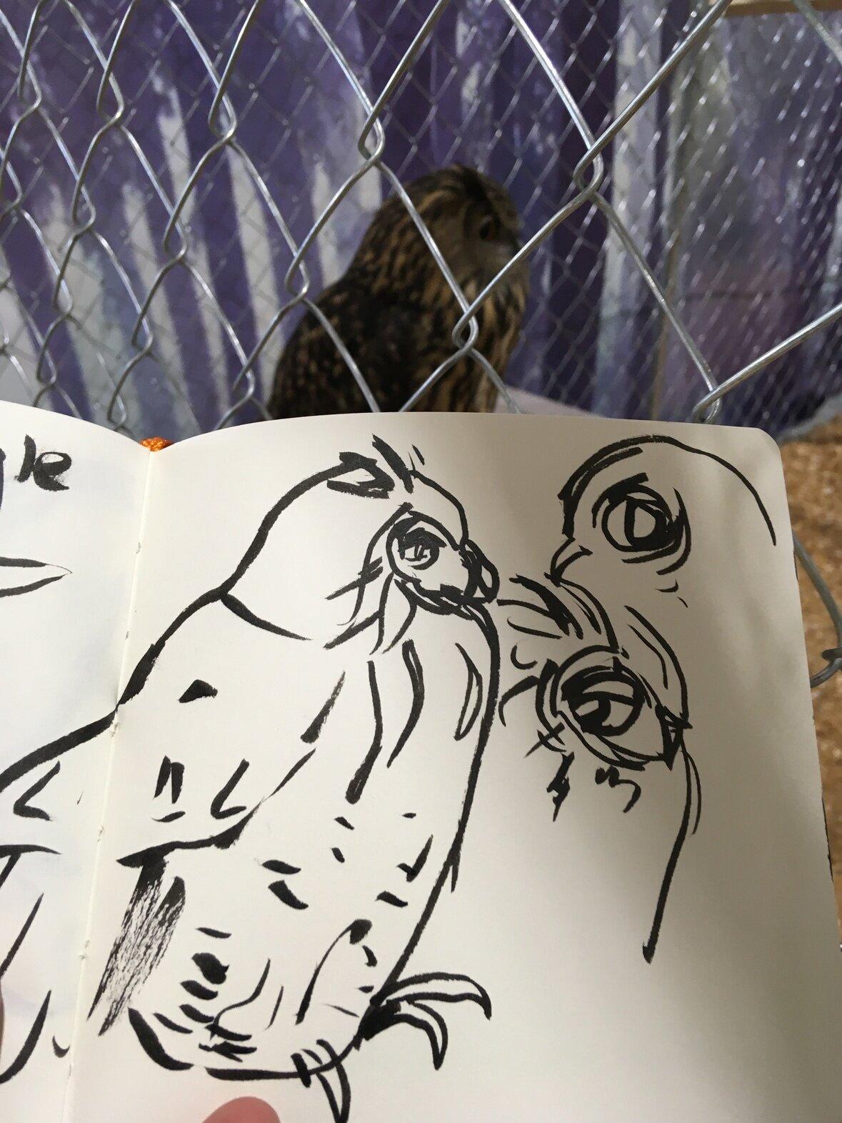 Amazing Eurasian Eagle Owl.