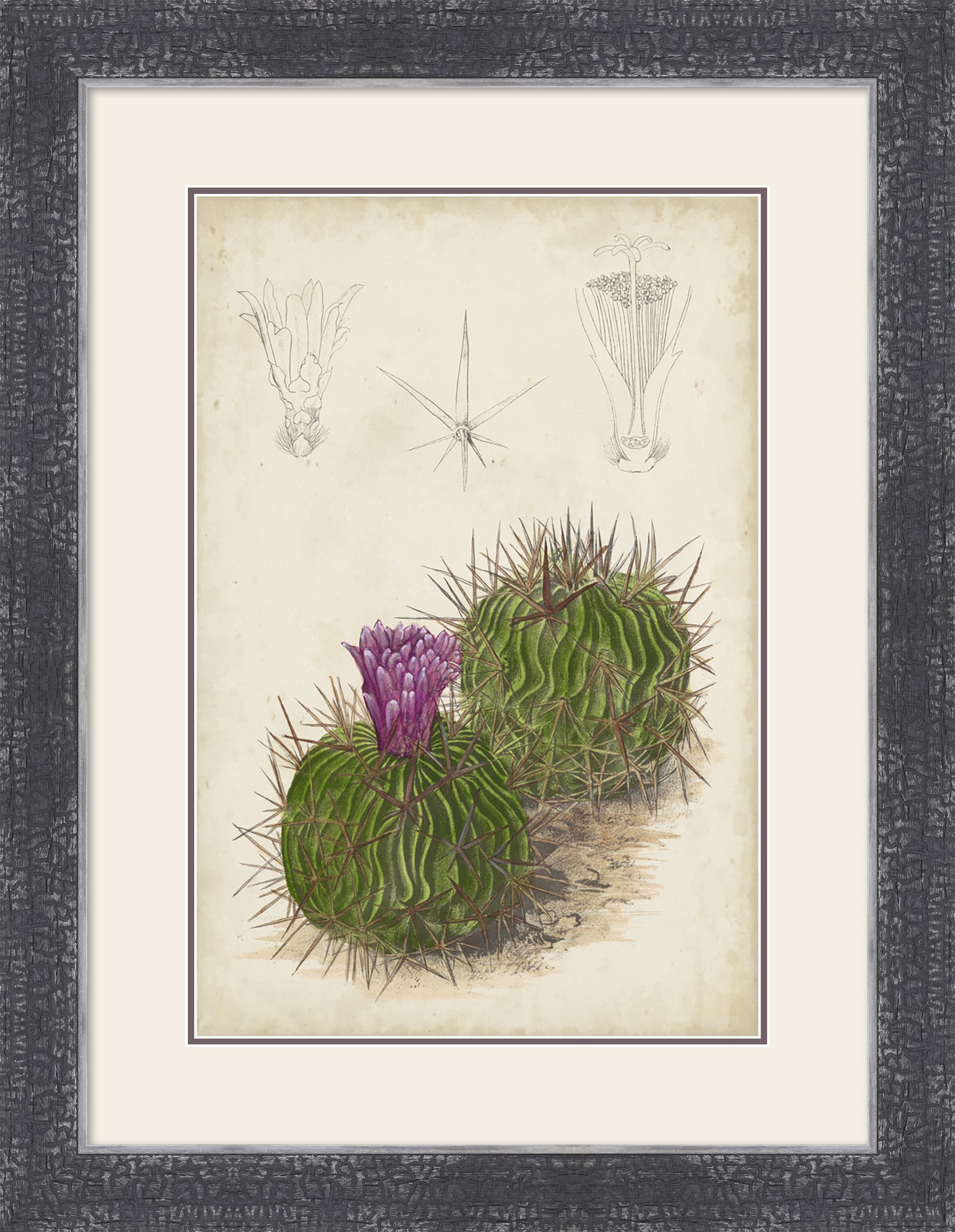 120447Z Antique Cactus II.jpg