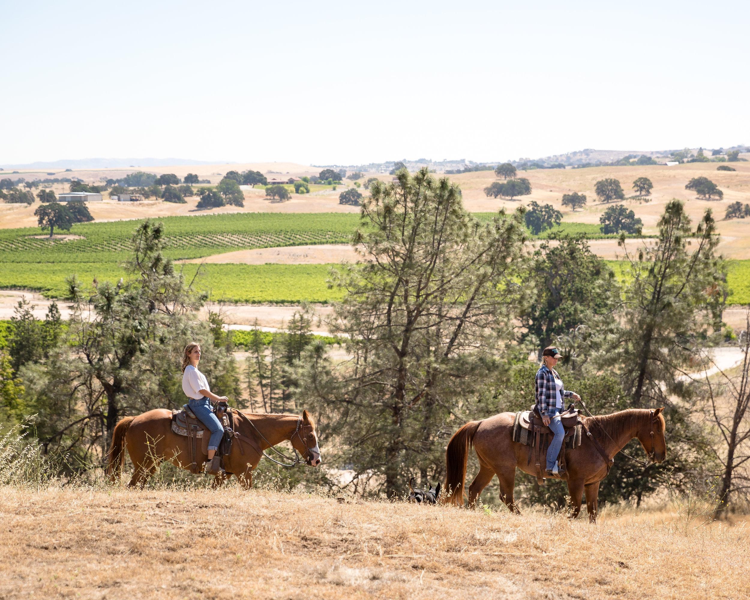 Paso-Robles-Horse-Tour