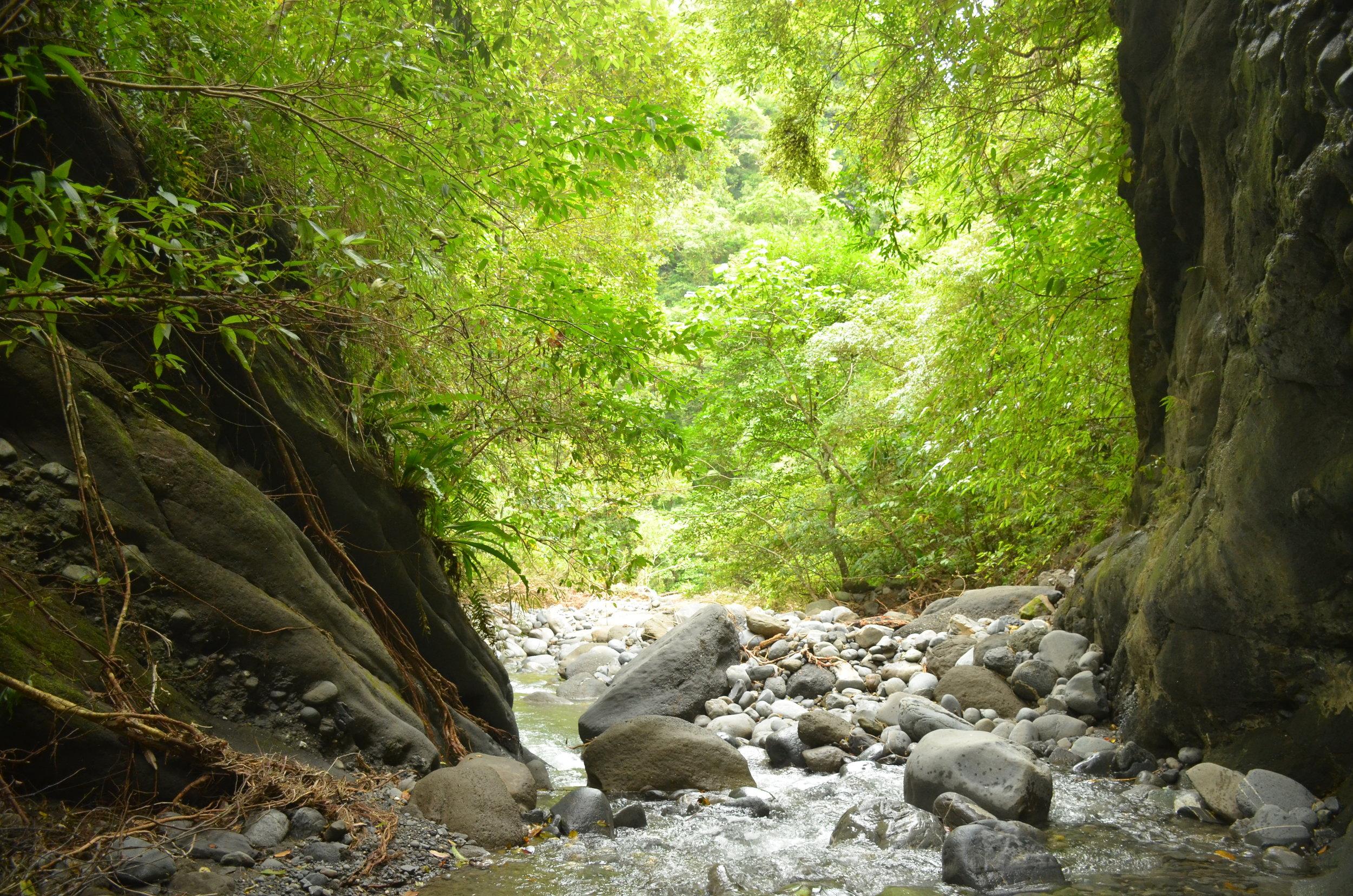 12號溪人煙稀少,山林環境非常天然