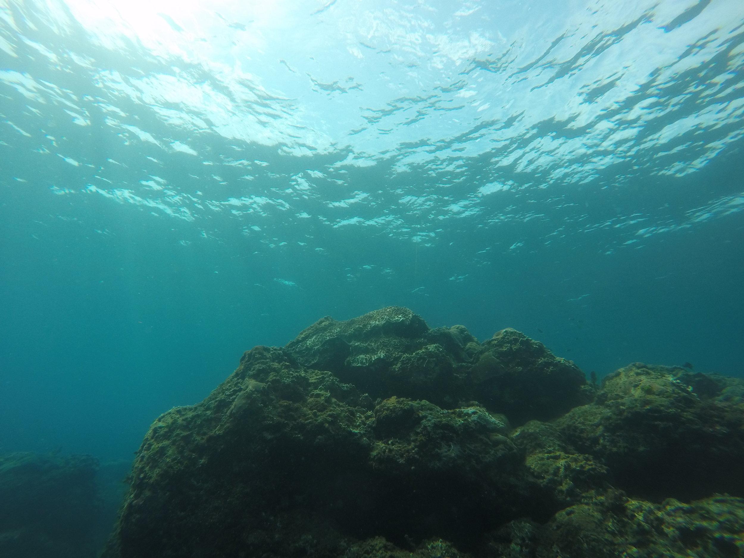 陽光映照的礁石,這次潛水發現珊瑚的狀況不太好...