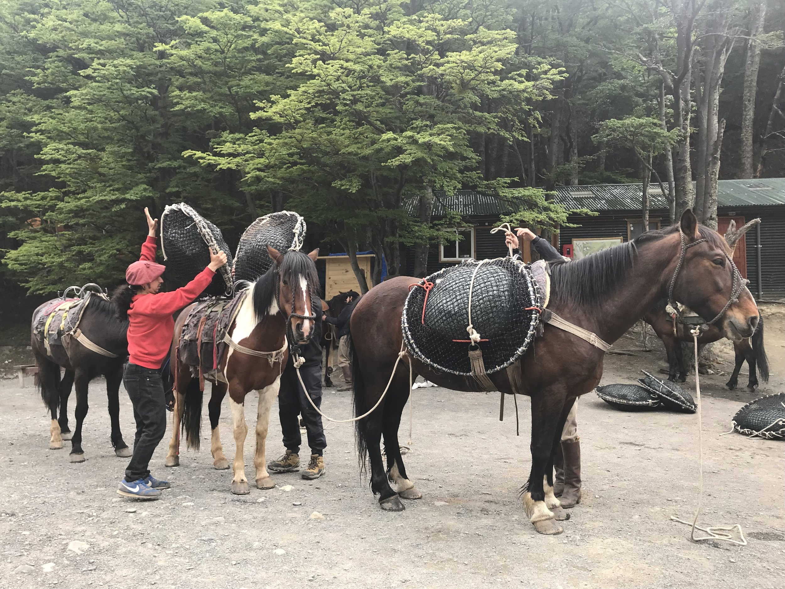 These horses carry the trash back down to civilization