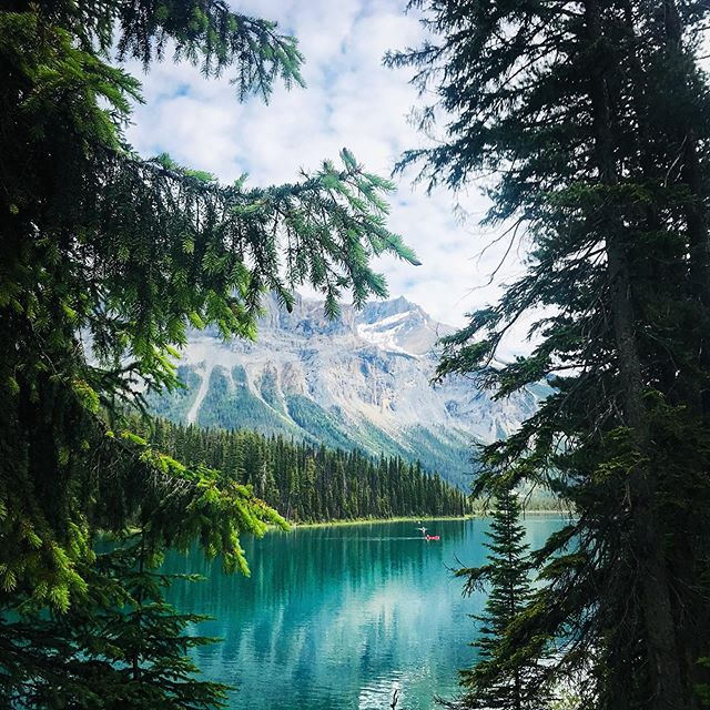 🍃Lake life🌱 // Not hard to see how Emerald Lake got its name. Only 20 minutes away from Lake Louise at Yoho National Park #yolo #yoho #canada #nationalparks #emerald #green #lakes #nature #instatravel #hiking #canoes #freshair #tlpicks #tripadvisor