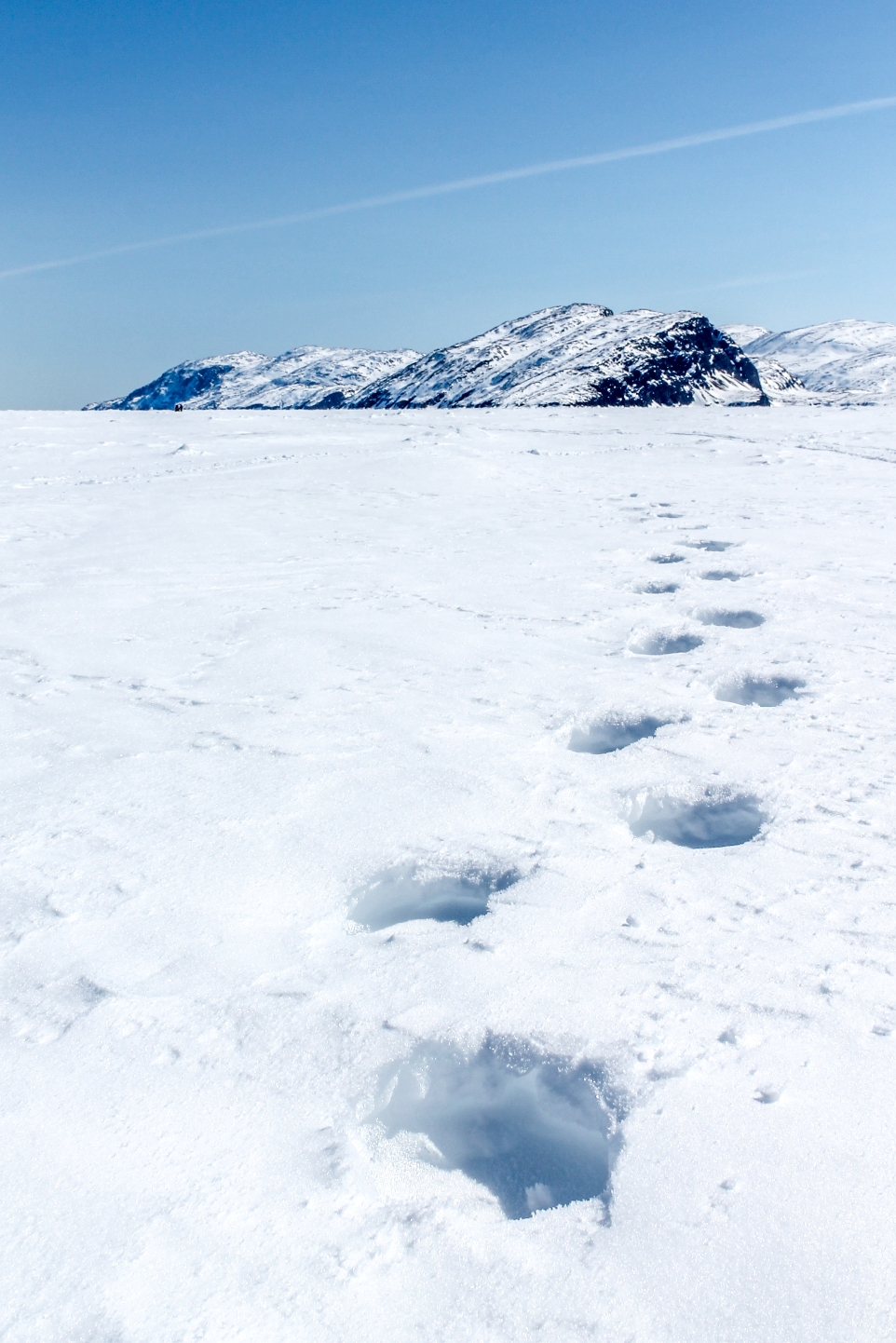 These are polar bear paw prints. They were blown in, meaning that they weren't fresh tracks. I don't know if I was happy or disappointed...