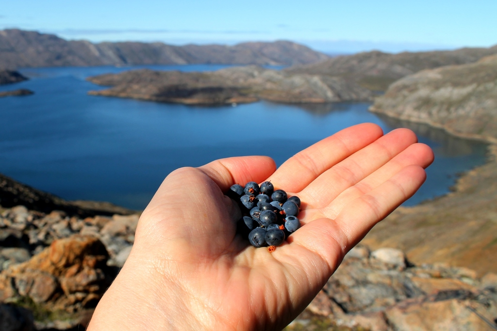 With Iqaluit so far away, these berries were all ours for the taking.