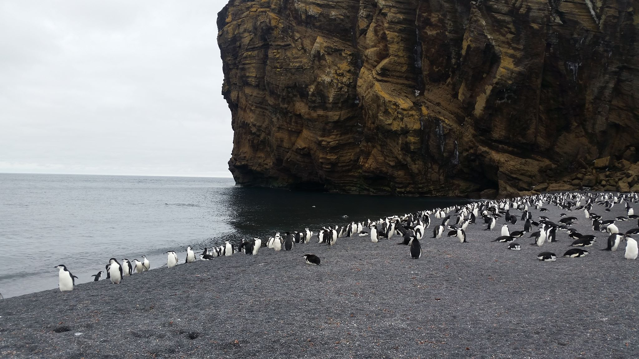 Bailey Head is home to about half a million penguins and is the biggest preserved wildlife sanctuary in the world.