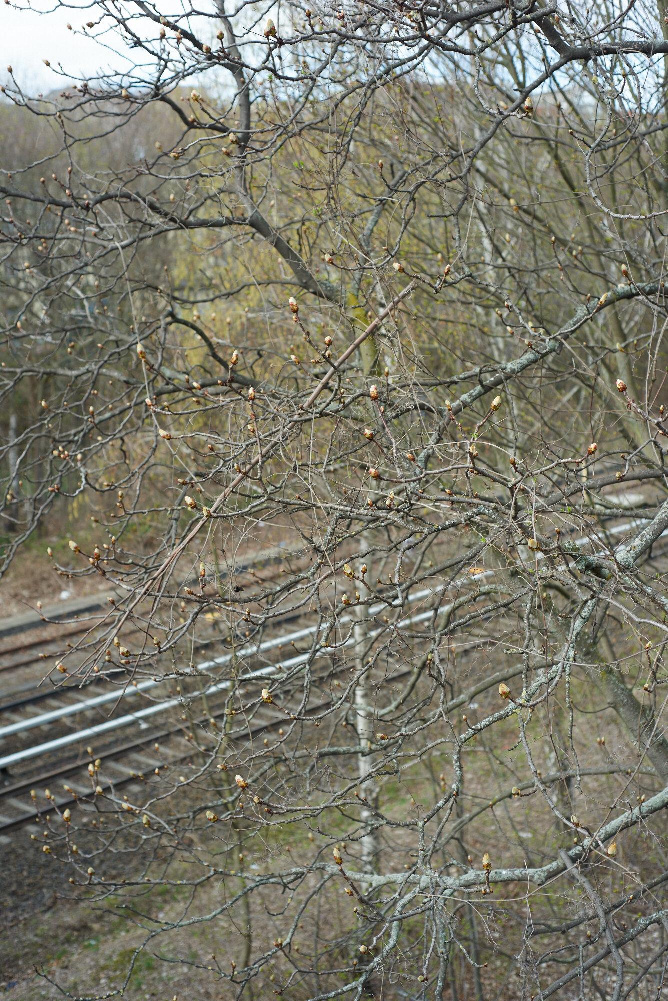 A bridge_159.jpg