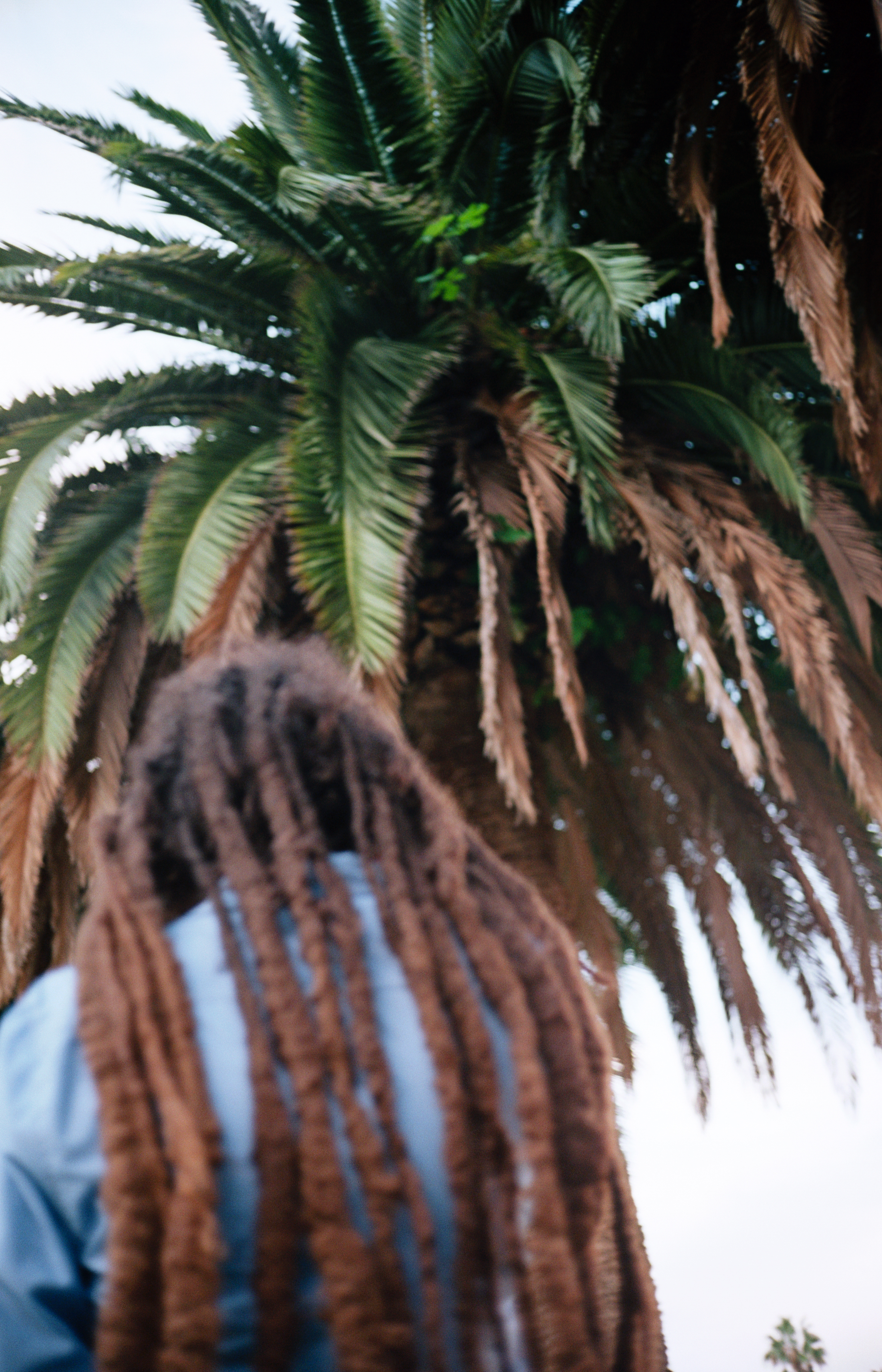 Dreads and palm tree.jpg