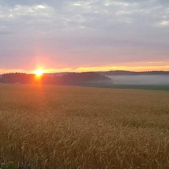 Pusulan aamut ovat kauniita.  #finnishnature #naturelovers #aamut #maisemakonttori #earlybirdjakelu