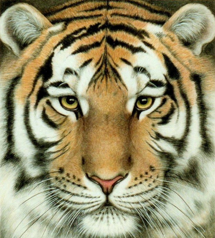 tiger_close_up_by_vangoghmetal666-d3hue8v.jpg
