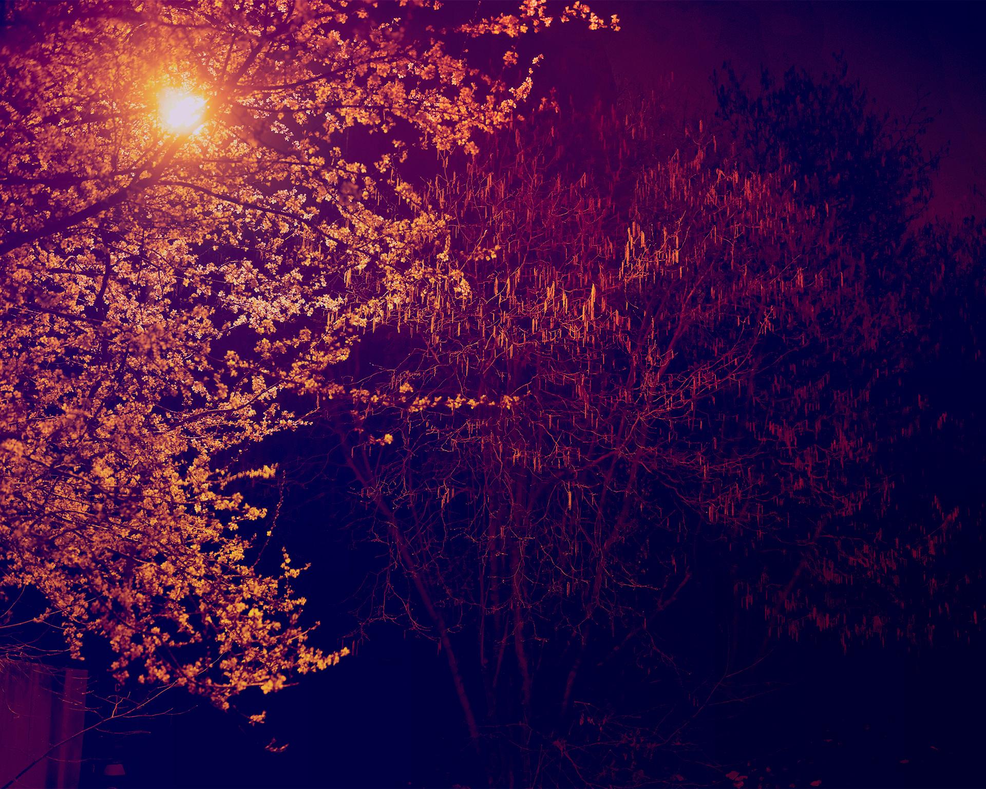 FerrierEstate_Tree_at_Night_a.jpg
