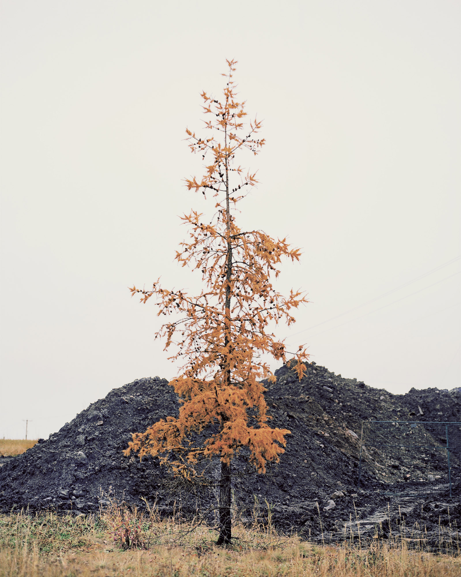 Tree Portrait Series, Fort McMurray, Canada. November 2016