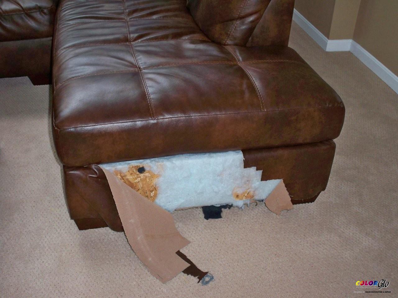 pet damage 2.jpg