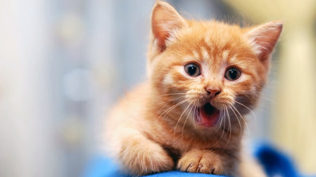 lemon oil cat repellent