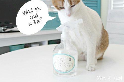 Diy Make Your Own Cat Repellent Spray