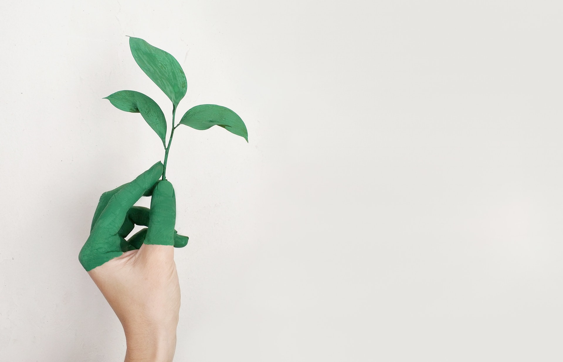 Green Products Mean Healthy Franchisees