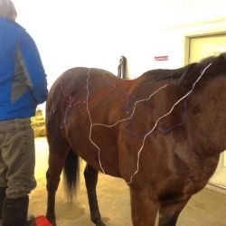 Electro Acupuncture on an Eventer