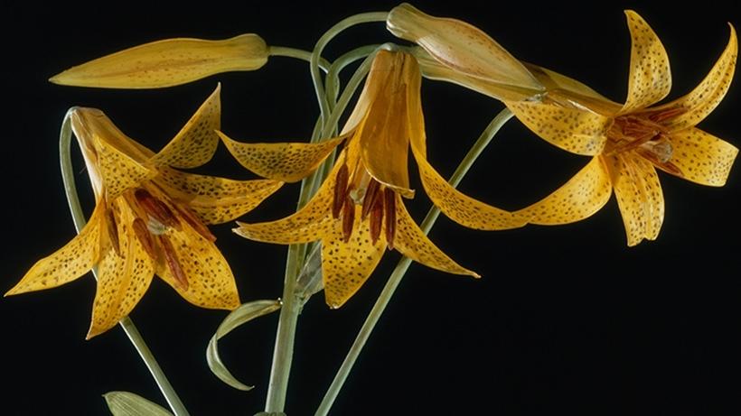 glass-flowers-3.jpg