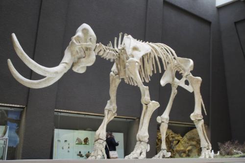 Woolly Mammoth Skeleton.png