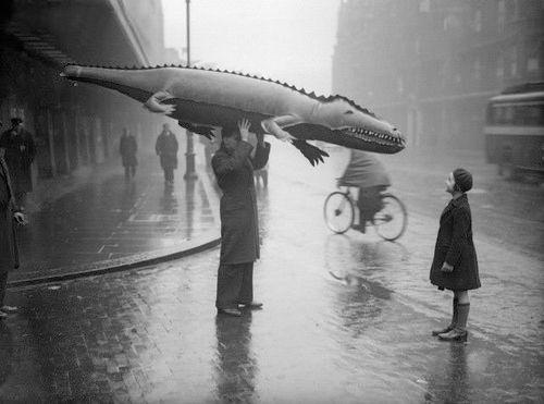 725e5fd55ecbf8d6658044617c9b08f3--crocodiles-alligators.jpg