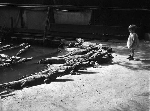 vintage1920sphotographyalligatorsbaby.jpg