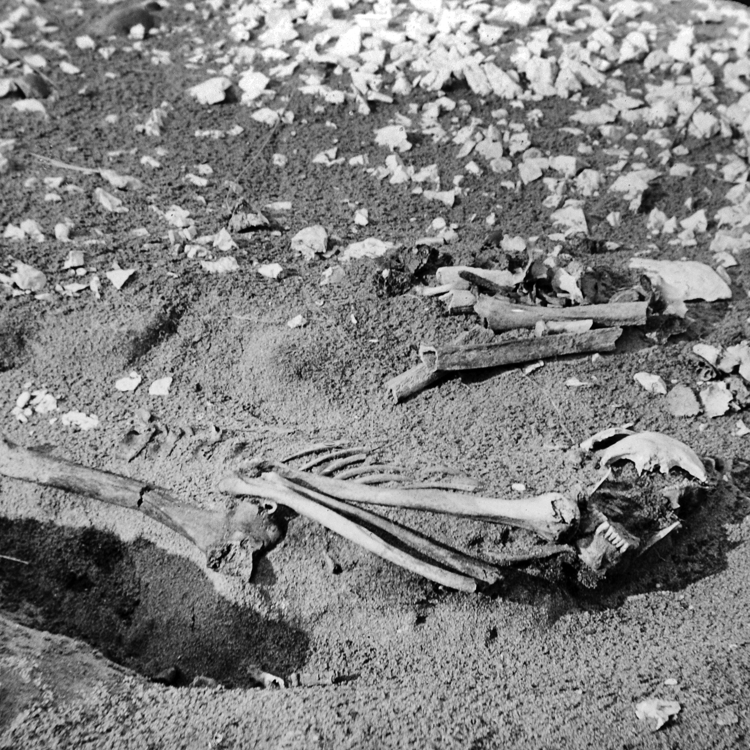 RJW-'The human skeleton found at the Middens, Whitepark Bay'. 1897..JPG
