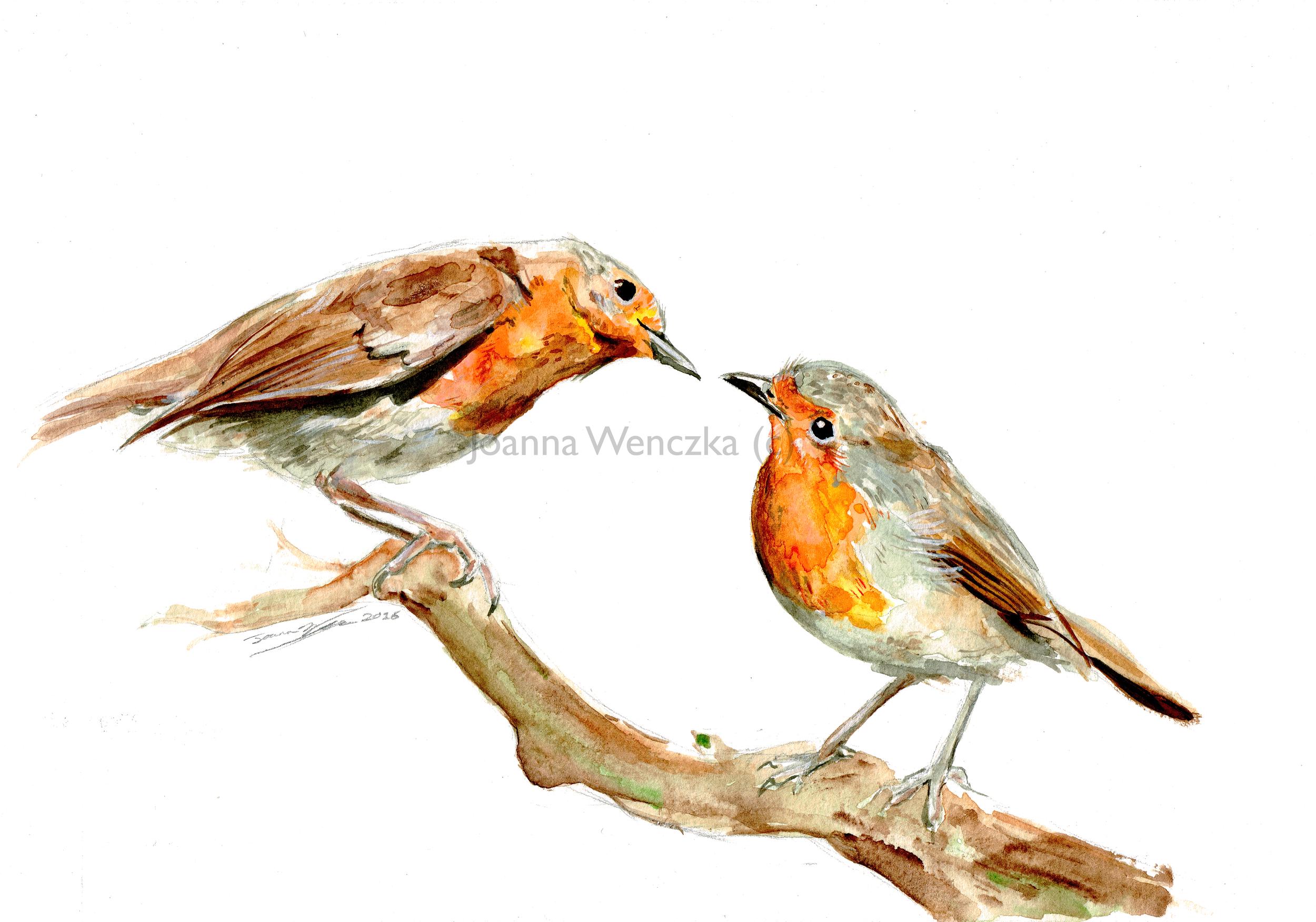 Curious Robins