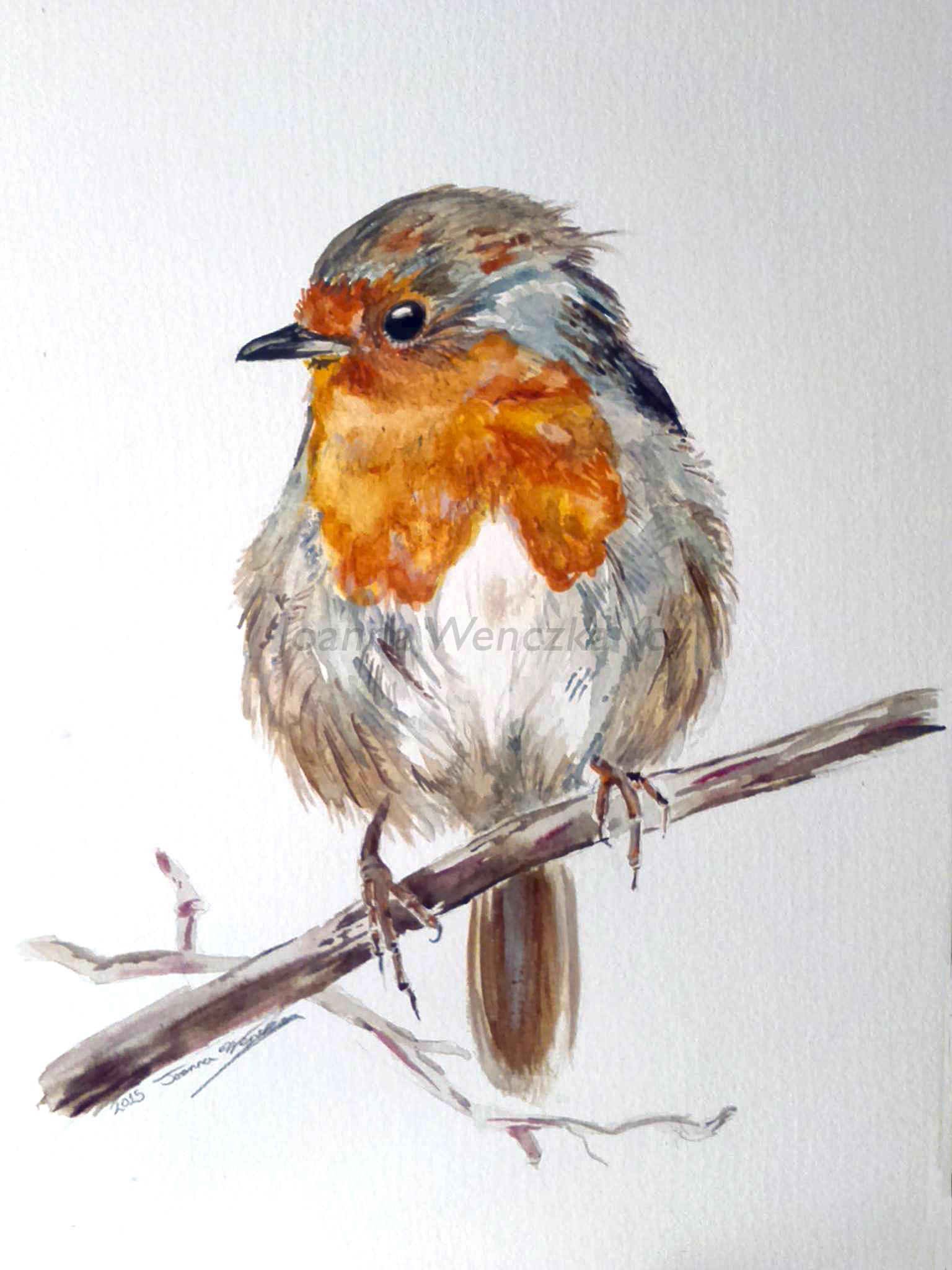Christmas Robin watermarked.jpg