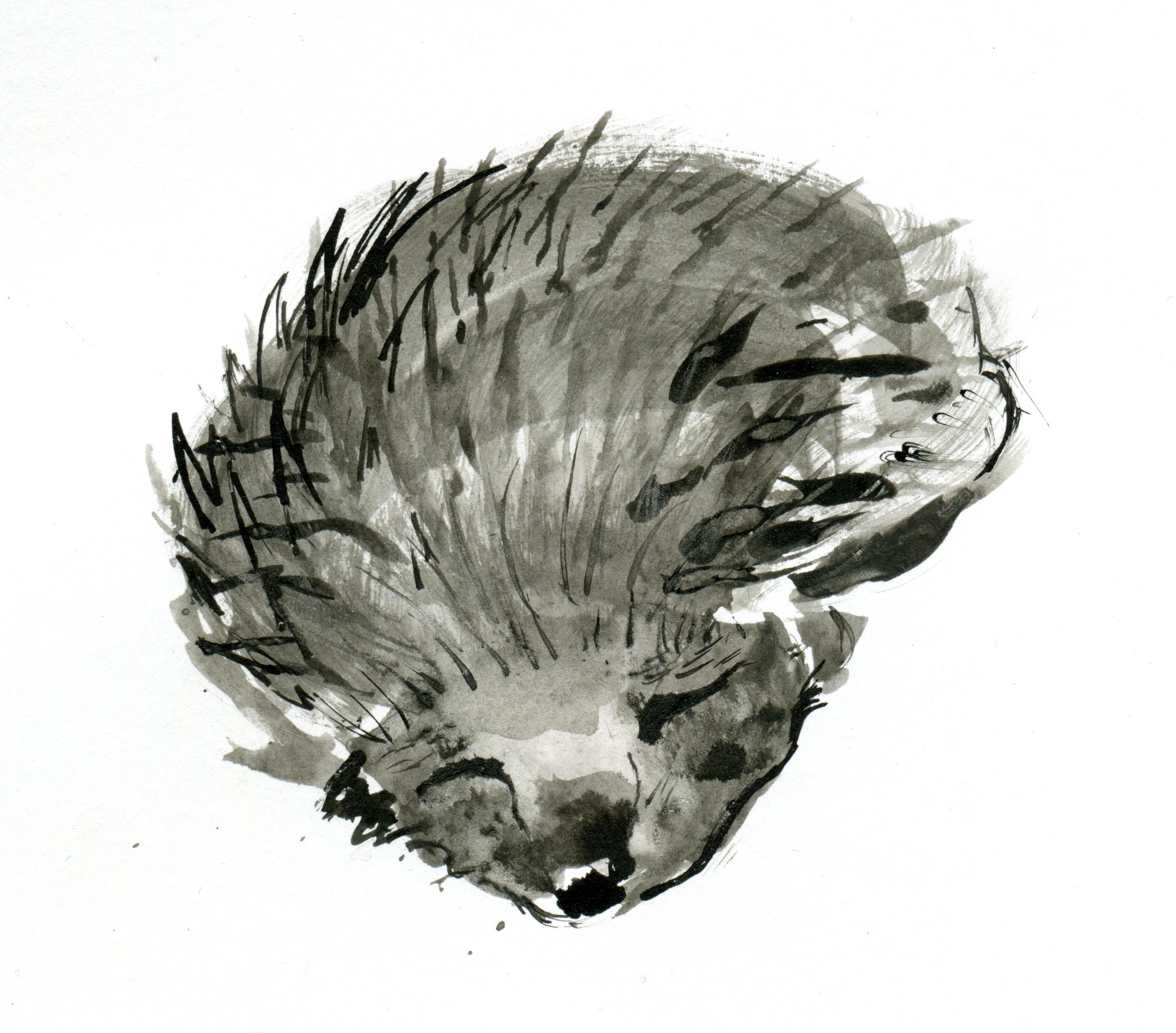 AV_Logo003.jpg