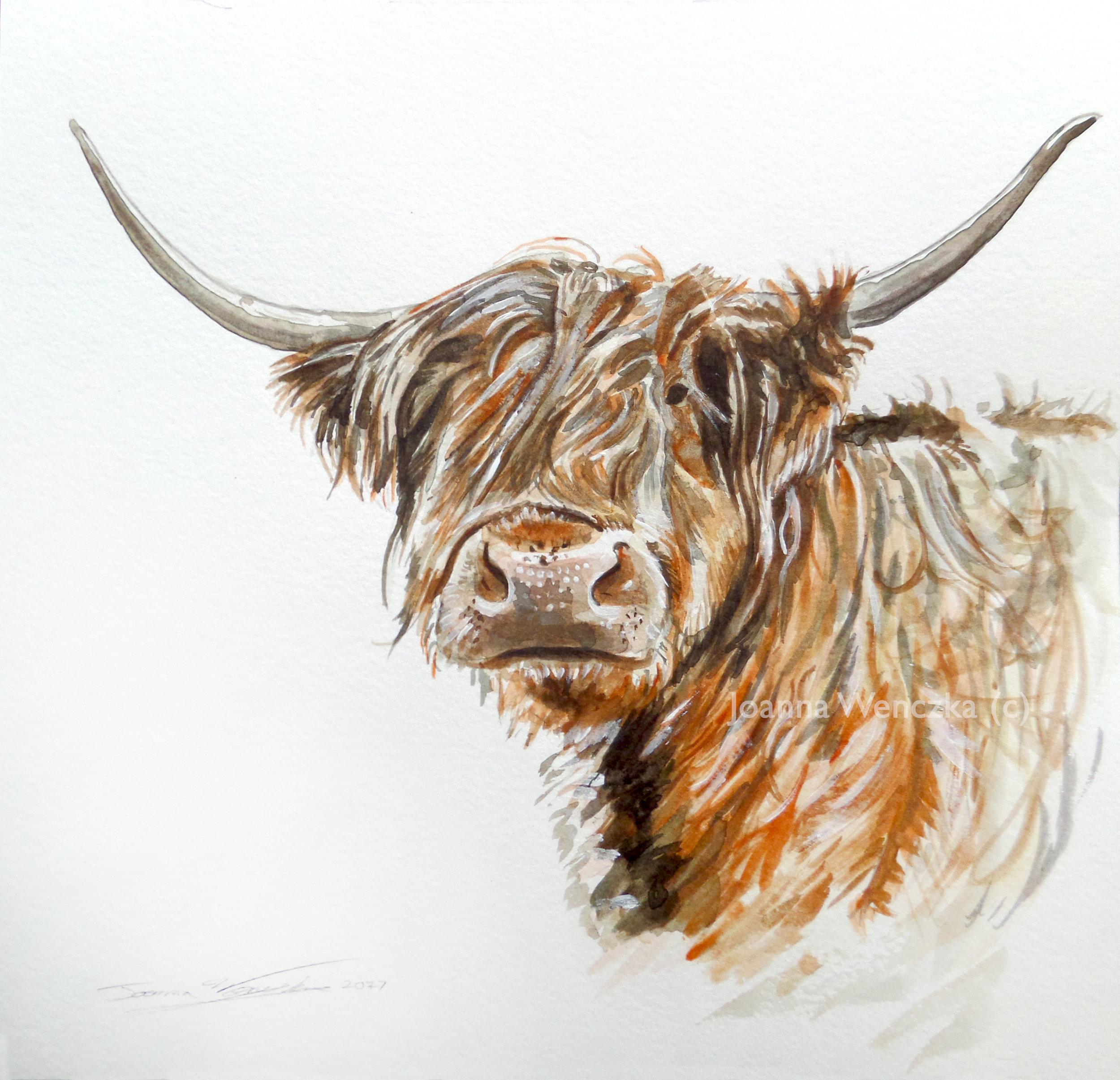 Highland Cow 001.jpg