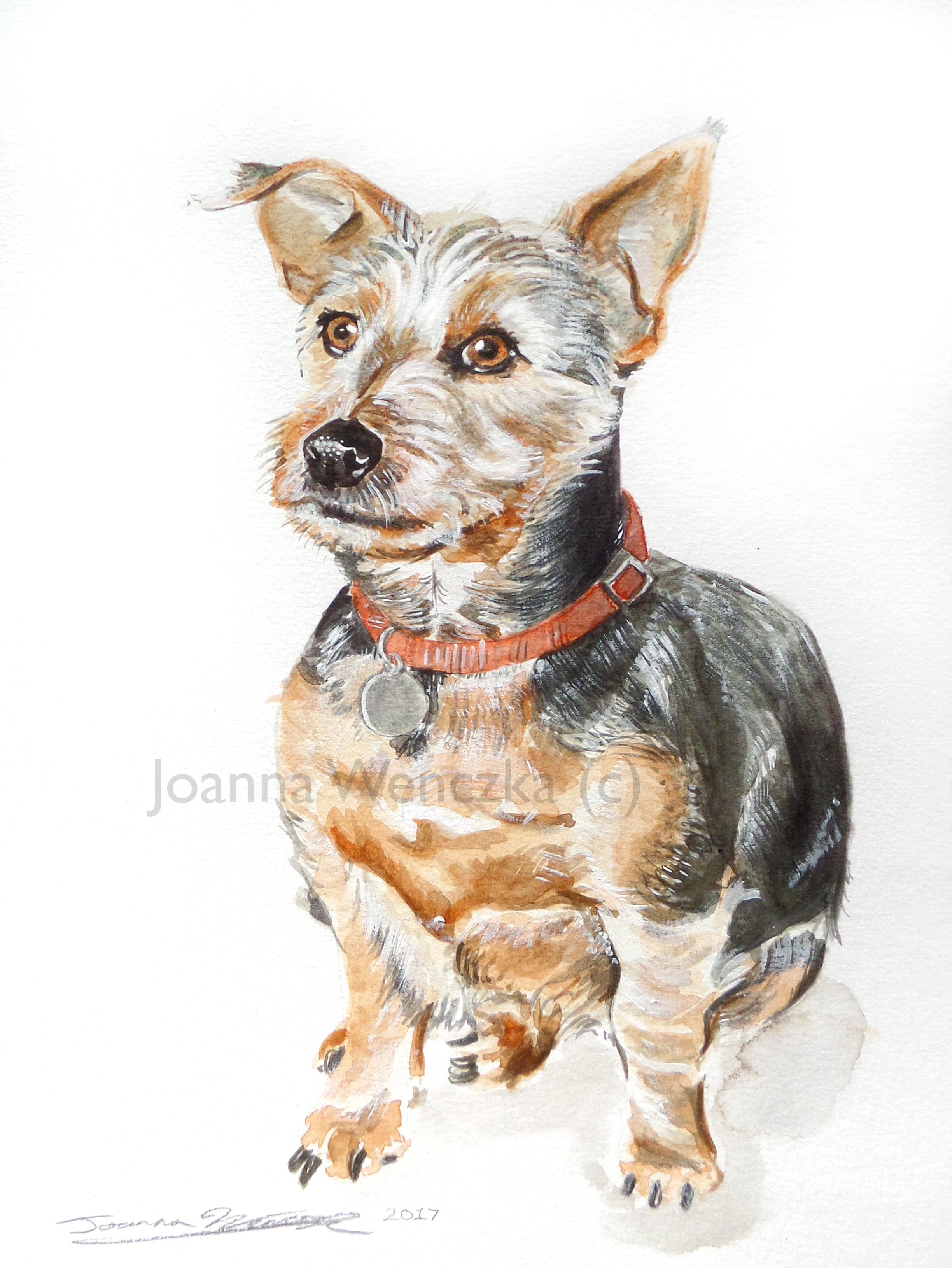 Bobby Pet Portrait.jpg