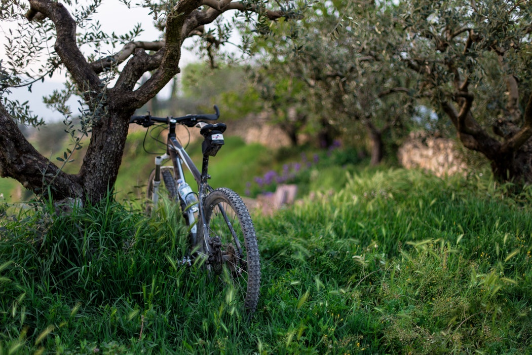 bike - afternoon with dinner -