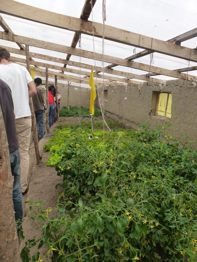 A guided tour through Don Pedro's green houses in Achocalla.