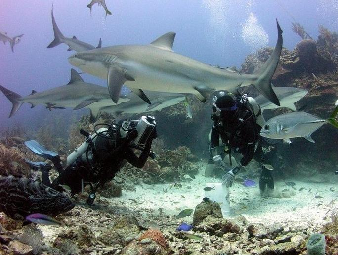 Shark Encounter in Roatan