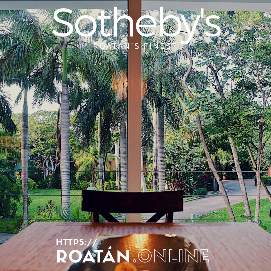 Sotheby's Roatan Palm Window
