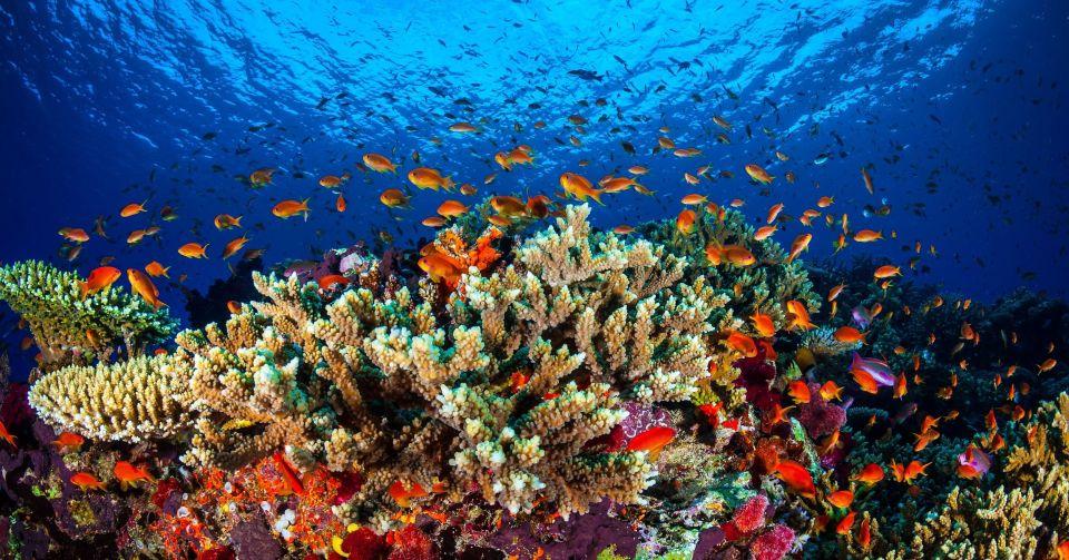 Coral Reef Roatan